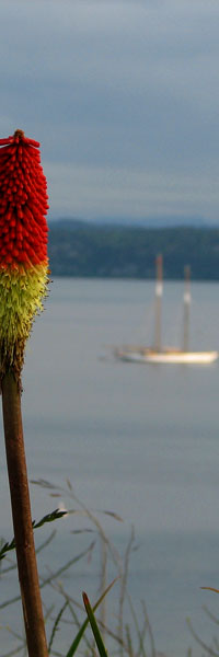 Port Towsend flower with sailboat